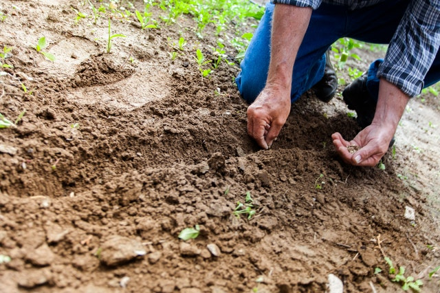 Gardening Benefits that are sure to make it your hobby