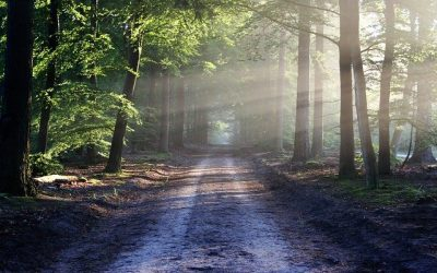 What effect does nature have on our wellbeing?
